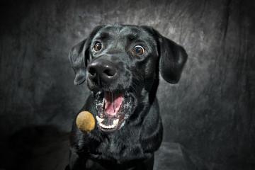 Hundeleckerli Schnappschuss
