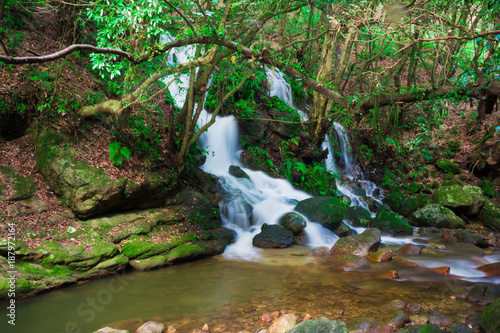 Foto Murales Tropical forest waterfall