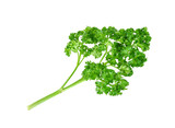 Fresh parsley isolated on a white background - 187977964
