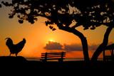 Rooster enjoying a sunrise onthe beach - 187999120
