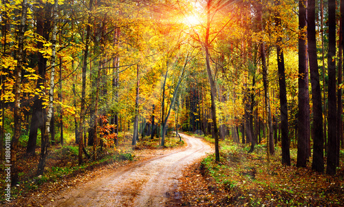 In de dag Honing Autumn forest landscape on sunny bright day. Vivid sunbeams through trees in forest. Colorful nature at fall season.