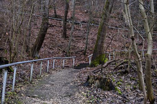 Road in forest Spaziergang auf den Berg durch den Wald, Giengen/Brenz, Deutschland, Europa