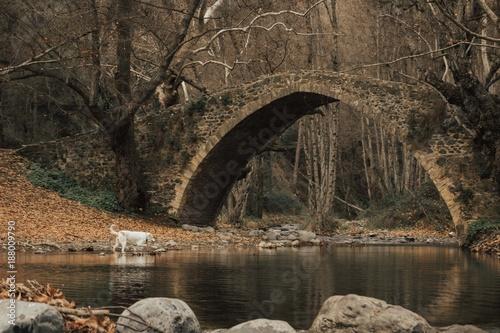 Dog and Bridge - 188009790