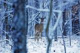 Deer in woods during winter - 188026335