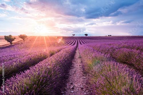Valensole Plateau, Provence, Southern France. Lavender field at sunset - 188067937