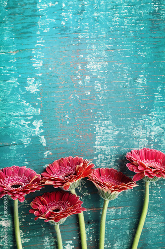 Aluminium Gerbera Gerbera daisy flower greeting card concept. Floral border on vintage teal background. Top view. Greeting card for mother or womans day..