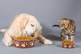 Dog and cat eating - 188101331