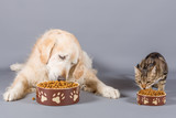 Fototapeta Dog and cat eating