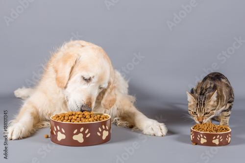 Dog and cat eating © 135pixels
