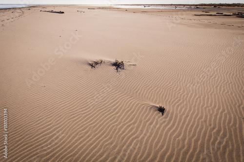 driftwood and sand on a wild beach