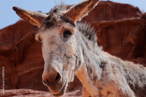 Foto Murales Donkey