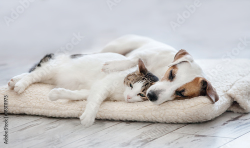 Canvas Kat Cat and dog sleeping