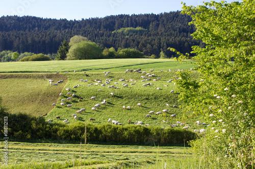 Fotobehang Pistache Landschaft mit Schafen