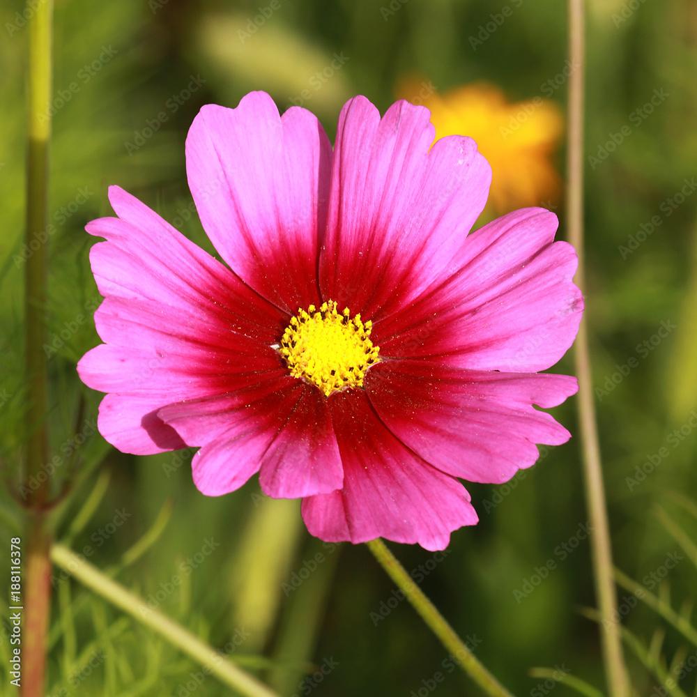 Strona 8 Fototapety Hcast 138363 Fototapety Na Wymiar  # Meble Narcisse