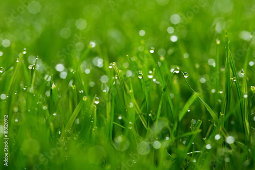 Green grass with water drops macro  - 188120912