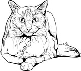 Cat portrait black and white.