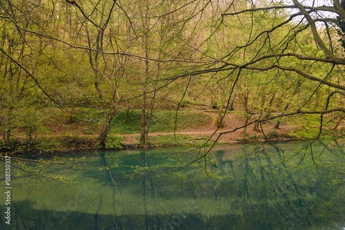 Small lake with trees