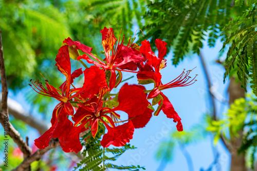 Fotobehang Zanzibar Clove or Syzygium aromaticum