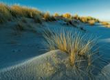 Dünenlandschaft mit Strandhafer am Ellenbogen von Sylt - 188148369