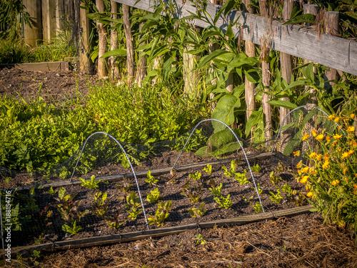 Foto Murales Organic vegetable garden