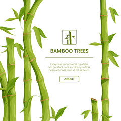 Eco background pictures with decorative illustrations of bamboo and place for your text © ONYXprj