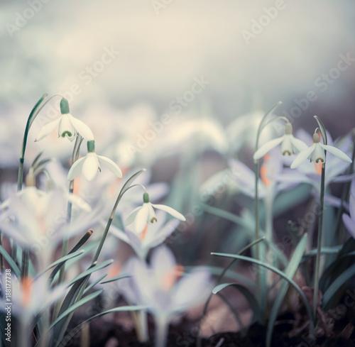 Keuken foto achterwand Natuur Springtime background with spring flowers, outdoor nature
