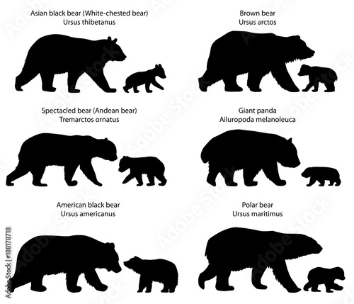Collection of silhouettes of  different species of bears and bear-cubs