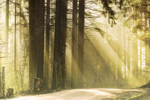 Magic sun casting beautiful rays of light through the forest trees.