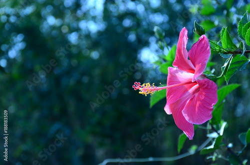 Fotobehang Azalea Colorful flowers in nature.