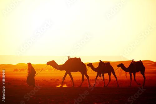 Fotobehang Marokko Caravan of camels in Sahara desert, Morocco