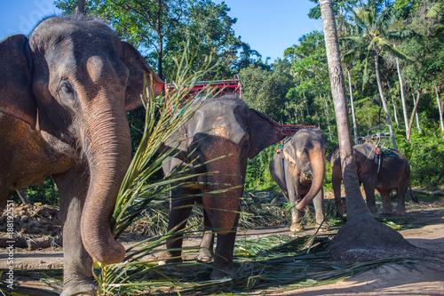 Foto Murales elephant's life in captivity