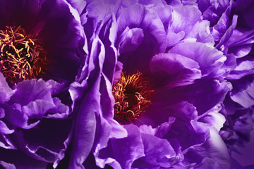 Dark mystic flowers - Ultra Violet -- Color of the year 2018
