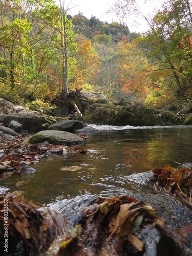 Papiers peints Rivière de la forêt 紅葉
