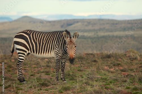 Animals of Mountain Zebra National Parks (South Africa) - 188209578