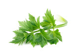 Celery or parsley leaf isolated on white background - 188210523