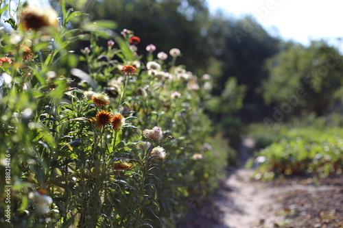 Kwiaty w ogrodzie - 188214126