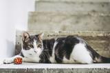 Jeune chat blanc tigré et sa balle - 188214710