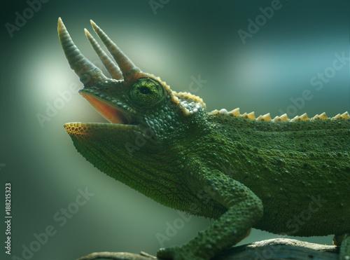 Fotobehang Kameleon Caméleon