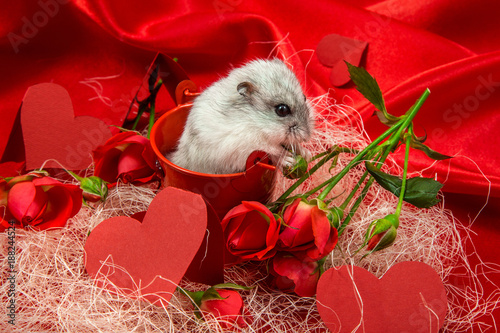 Foto Murales Valentine's day postcard in red tones with a rose, hearts and a jungle hamster
