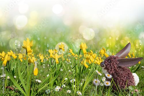 Foto Murales Wiese mit Narzissen und Gänseblümchen, selbstgebastelter Osterhase