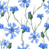 Seamless pattern of bue cornflowers