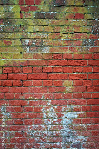 Papiers peints Brick wall Old red brick wall with green mold, white fungus and general decay