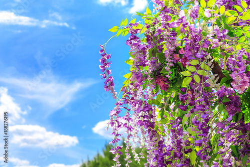 Foto Murales Spring blooming flowers in the green leaves in the sunlight on the background of blue sky