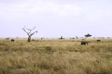 Serengeti Elefant