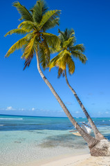Perfect tropical white sand beach with two palm trees