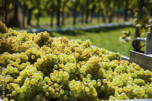 vintage in the vineyard - 188297582