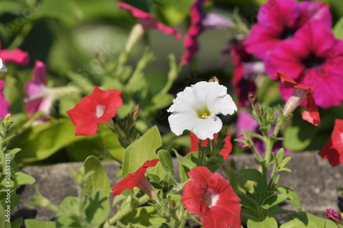 beautiful bouquet of spring flowers on a white background - 188331301