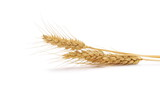 Ears of wheat isolated on white background - 188334142