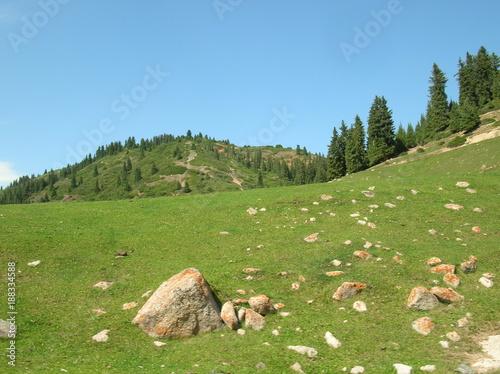 Fotobehang Pistache Alpine meadows