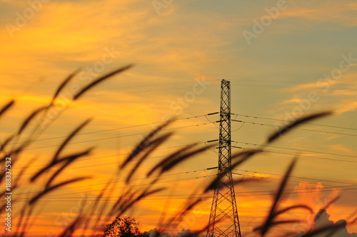 Fotobehang Oranje Sunset and high voltage transmission towers The golden sky with beautiful grass flowers in the middle of the field in the evening.
